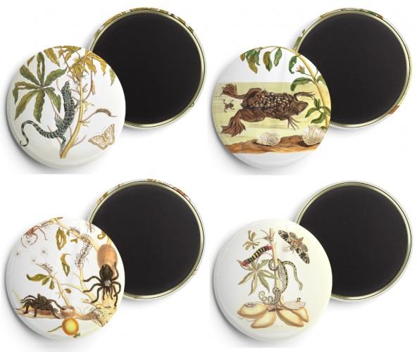 Foto do produto Buttons  Maria Sibylla Merian (1647-1717) - (4 unid)