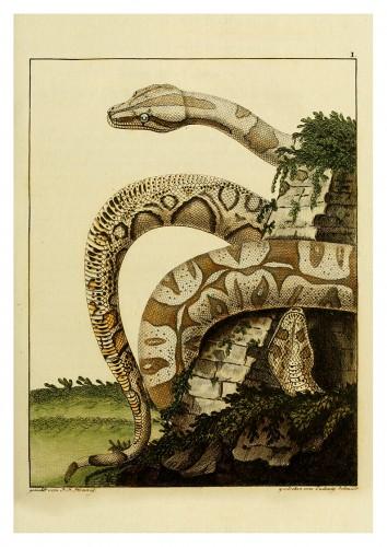 Foto do produto Pôster BLASIUS MERREN, 1790  Boa