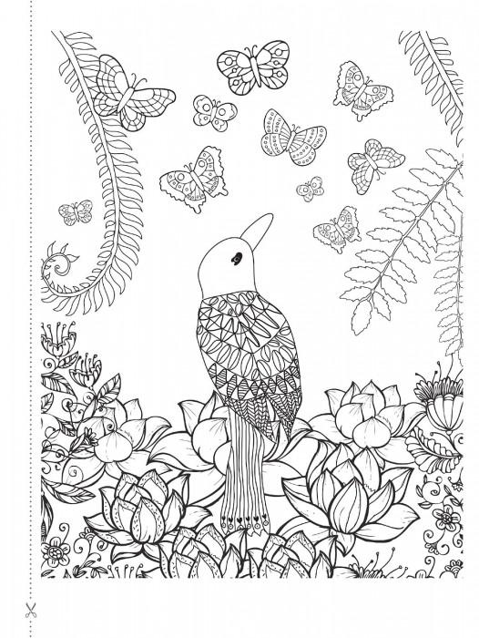 Natureza Para Colorir Liberte Sua Mente E Relaxe Anolis Books