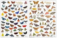 Borboletas + Mariposas do Brasil