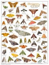 Mariposas do Brasil