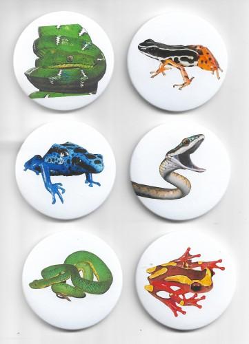 Buttons Anfíbios e Répteis (6 espécies)  - Coleção 1