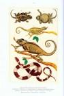 Foto do produto Cabinet of Natural Curiosities