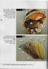 Foto do produto Atlas anatômico e histológico do Caranguejo-Uça (Ucides cordatus)