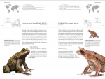 Foto do produto The Book of Frogs: A Life-Size Guide to Six Hundred Species from around the World