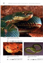 Foto do produto Venomous Snakes of South America