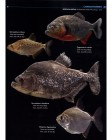Foto do produto Field Guide to the Fishes of the Amazon, Orinoco, and Guianas