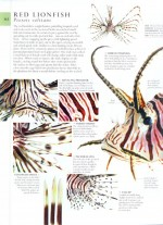 Foto do produto Natural History: The Ultimate Visual Guide to Everything on Earth