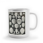 "Foto do produto Caneca Haeckel, 1898 ""Ammonitida/Aspidonia"""