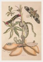Foto do produto Pôster Maria Sibylla Merian (1647-1717) - Serpente
