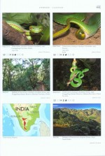 Foto do produto Venomous Snakes of Asia