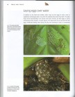 Foto do produto Frogs and Toads of the World (2011)