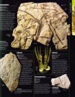 Foto do produto Prehistoric Life: The Definitive Visual History of Life on Earth