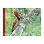 Foto do produto Aves do Cerrado  - Volume 3 - Coleção Aves nos biomas brasileiros