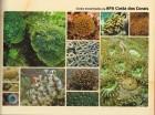 Foto do produto Guia da biodiversidade marinha da APA Costa dos Corais