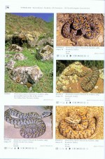Foto do produto Venomous Snakes of Europe, Northern, Central and Western Asia