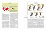 Foto do produto Handbook of the Birds of the World: Barn Owls to Hummingbirds: 5