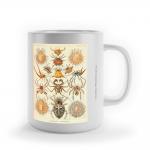 """Foto do produto Caneca Haeckel, 1898 """"Arachnida"""""""