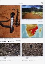 Foto do produto Venomous Snakes of Africa