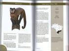 Foto do produto Primatas do Brasil - Guia de Campo