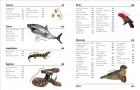Foto do produto The Animal Book: A Visual Encyclopedia of Life on Earth