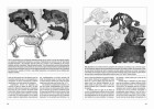 Foto do produto Vida en Evolución: la historia natural vista desde sudamérica