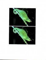 Foto do produto Amphibians & Reptiles in 3-D