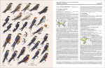 Foto do produto Handbook of the Birds of the World: Cotingas to Pipits and Wagtails: 9