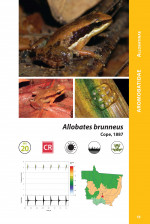Foto do produto Herpetofauna de Mato Grosso Vol. I - Anfíbios