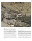 Foto do produto Venomous Snakes of the World (O'Shea)