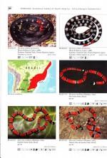 Foto do produto Venomous Snakes of South America