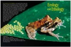Foto do produto Amphibians: The World of Frogs, Toads, Salamanders and Newts
