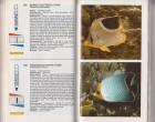 Foto do produto Simon & Schuster's Guide to Freshwater and Marine Aquarium Fishes