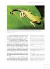 Foto do produto Guia dos Anfíbios da Mata Atlântica - Diversidade e Biologia