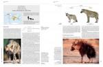 Foto do produto Handbook of the Mammals of the World – Volume 1 Carnivores