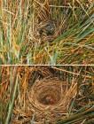 Foto do produto Berços da Vida, ninhos de aves brasileiras.