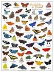 Foto do produto Borboletas + Mariposas do Brasil