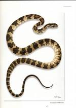 Foto do produto Serpentes - Arte e Ciência