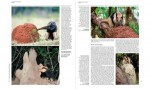 Foto do produto Handbook of the Mammals of the World - Volume 8 Insectivores, Sloths and Colugos