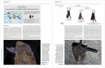 Foto do produto Handbook of the Mammals of the World, Volume 9: Bats