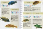 Foto do produto The Aquarium Fish Handbook: The Complete Reference from Anemonefish to Zamora Woodcats