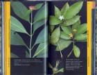 Foto do produto Guia Ilustrado para Identificação das Plantas da Mata Atlântica Legado das Águas -Reserva Votorantin