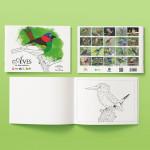 Foto do produto Livro de COLORIR – AVES da Mata Atlântica