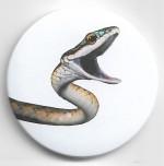 Foto do produto Buttons Anfíbios e Répteis (6 espécies)  - Coleção 1