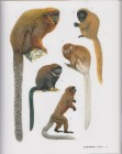 Foto do produto Primates of the World: An Illustrated Guide