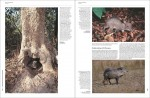 Foto do produto Handbook of the Mammals of the World – Volume 2 Hoofed Mammals